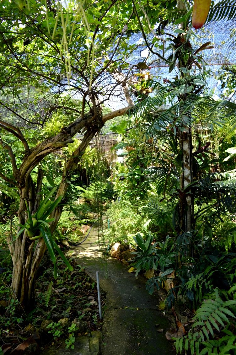 Jardin de los Helechos, Santiago de Cuba, Cuba 3.jpg