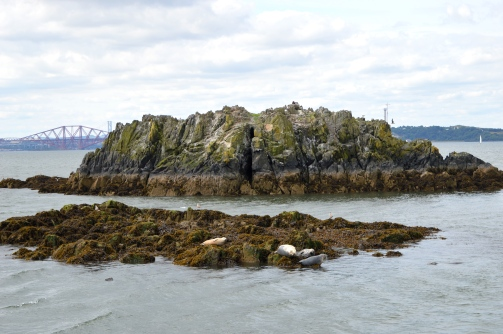 Seals basking on an Island on the Firth of Forth River, Scotland