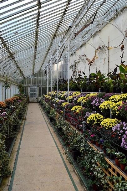 Inside Belfast Botanical Garden Conservatory, Northern Ireland
