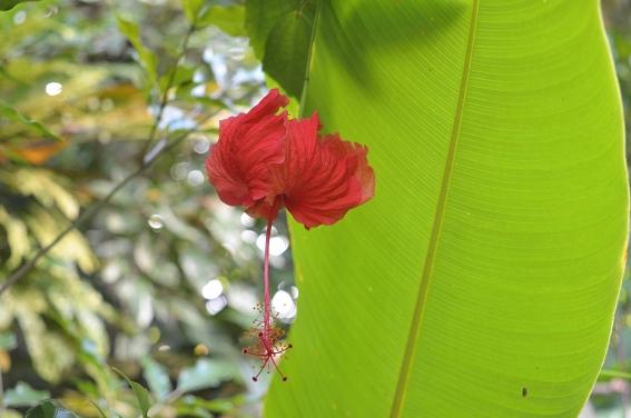 Jardin Botanico de Caridad, Vinales, Cuba